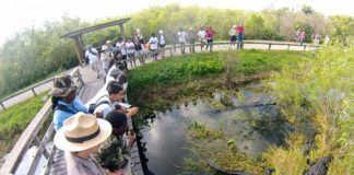 Everglades Florida.