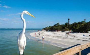 Fort Myers är vatten och öar, Sanibel